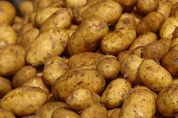 Yerli kartofun