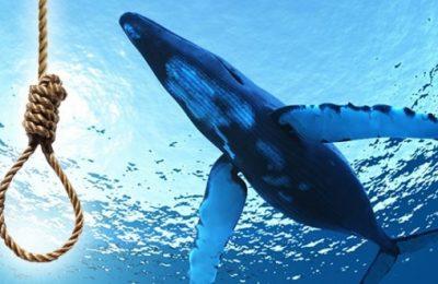 mavi balina oyunu
